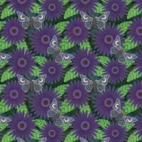 purple gerbera daisies with midnight moths