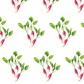 Raspberry Pink Radishes with Green Leaves on a White Background