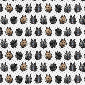 Small Belgian Shepherd Portraits - Malinois Laekenois Tervuren Groenendael Sheepdog