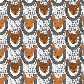 Toy Fox Terrier horseshoe portraits B