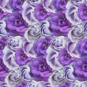 Purple Prairie