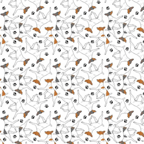Trotting Toy Fox Terriers and paw prints - white
