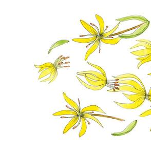 Avalanche Lily/Erythronium