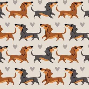 Dachshund Pups (extra small)