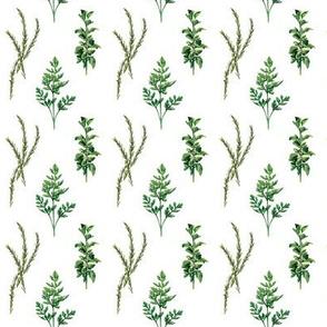 Parsley, Rosemary and Basil Ktichen Gardening Herbs