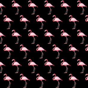 Flamingo on Black Smaller