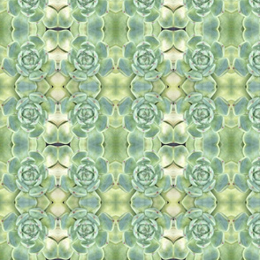 Pastel Succulents 1688: Pale Green