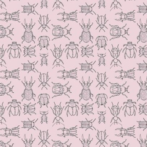 Beetles (Primrose Pink) - hand-drawn illustration bug insect biology animal scarab botanical jungle