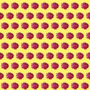 peony cotton voile-yellow