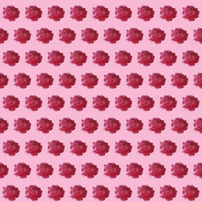peony cotton voile-pink
