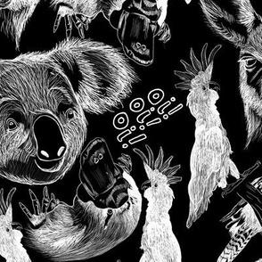 Australia Midnight Animals