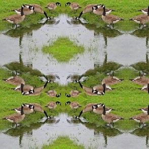 NC_Geese