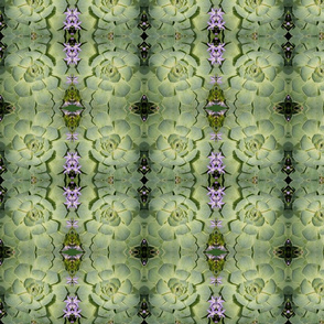 Pastel Green Succulents 8474