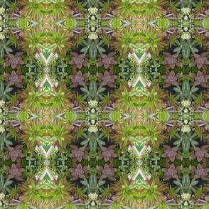 Succulent Surprise 1422