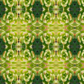 Vibrant Green Succulents 2582