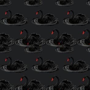 Black Swans on Black