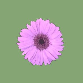 Daisy Dayz Giant Daisy