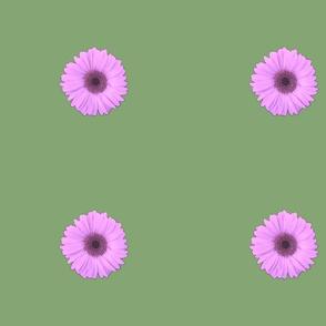 Daisy_Dayz_Big_Daisies
