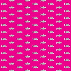 Fish on pink