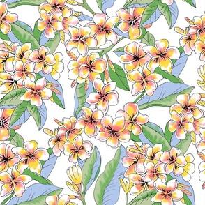 Vintage Yellow plumeria-white background