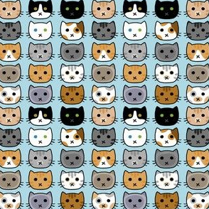 Kitty Faces Small