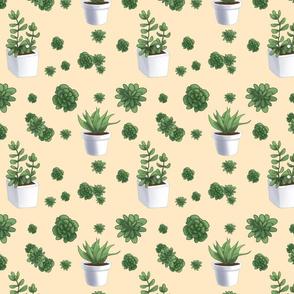 8x8_Succulent_on_Cream