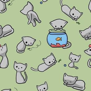 Jonesy the Kitten