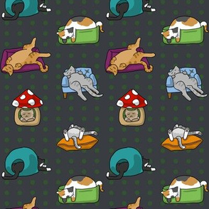 Cats N Beds