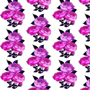 Pink Rose // Redoute Rose in Magenta Pink