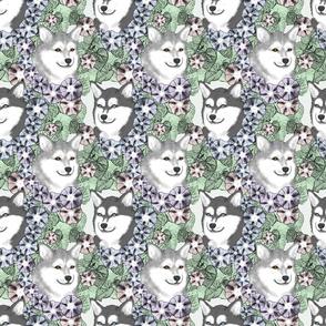 Floral Alaskan Klee Kai portraits B