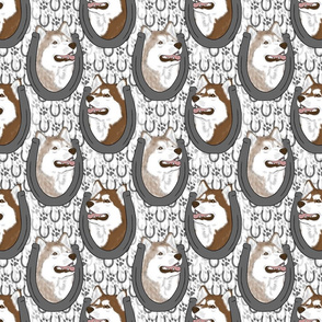 Siberian Husky horseshoe portraits