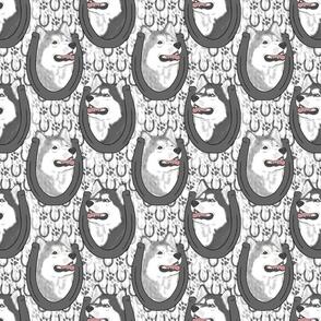 Siberian Husky horseshoe portraits B