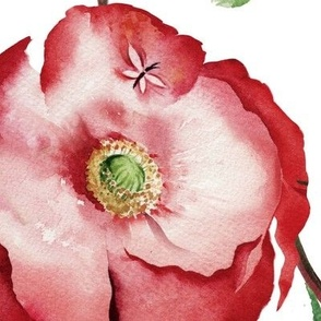 Poppies_White_Ground