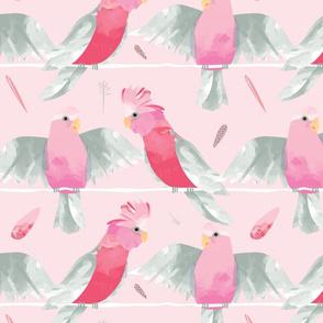 Pink Galahs // Australian birds pink grey parrot cockatoo feathers