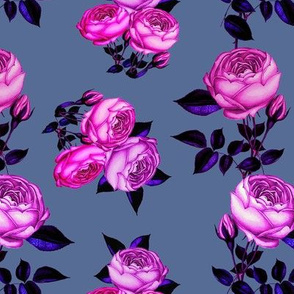 Pink Rose / redoute roses // lilac rose