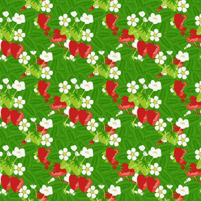 Strawberry_patch_berries__blooms_and_leaves_dense