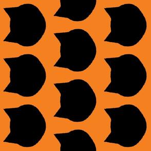 Black Cat Orange