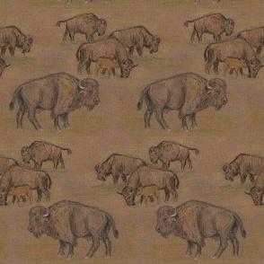 Bison Buffalo Herd