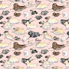 Pugs on the Move - pink