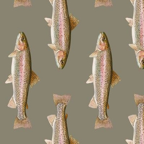 rainbow trout on pewter grey - vertical