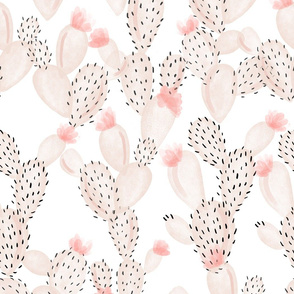 blush paddle cactus + rose