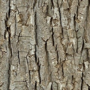 Endless Bark