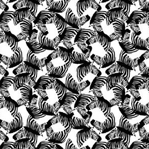 black_and_white_zebras