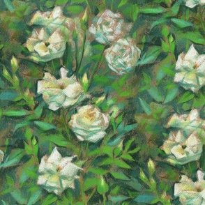 White Roses, Green Leaves