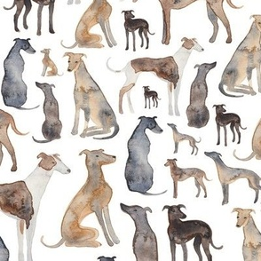 Greyhounds, Wippets and Lurcher Dogs!