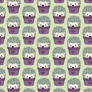Smaller hedgehogs disguised as lavender