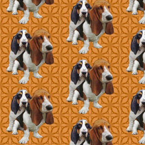 basset hounds two