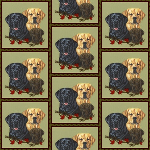 Labrador retriever dogs black, yellow and chocolate