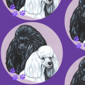 Black and white poodle dogs