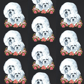 Bichon frise dogs with flowers on black